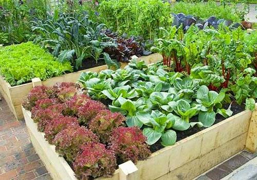 Качественные продукты с собственного огорода